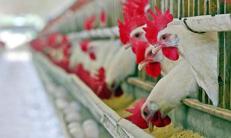 Large poultry farm in Bulgaria №2 for Sale