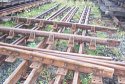 Used S49 Railroad switch {without sleepers} for Sale